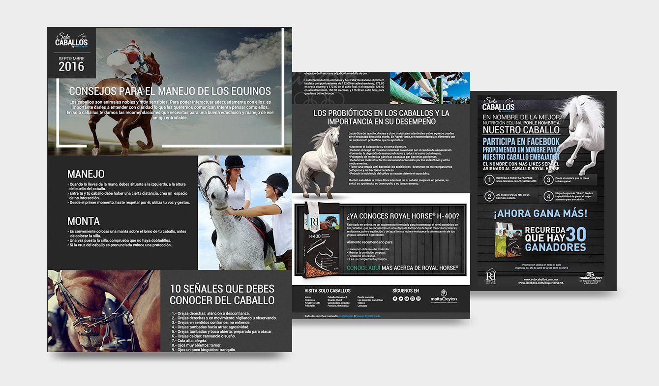 Mail Marketing para Solo Caballos de Malta Cleyton, diversas dinámicas